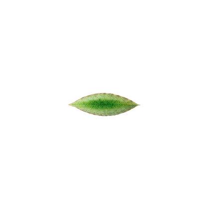 RIVIERA - Laurel Leaf Tomate