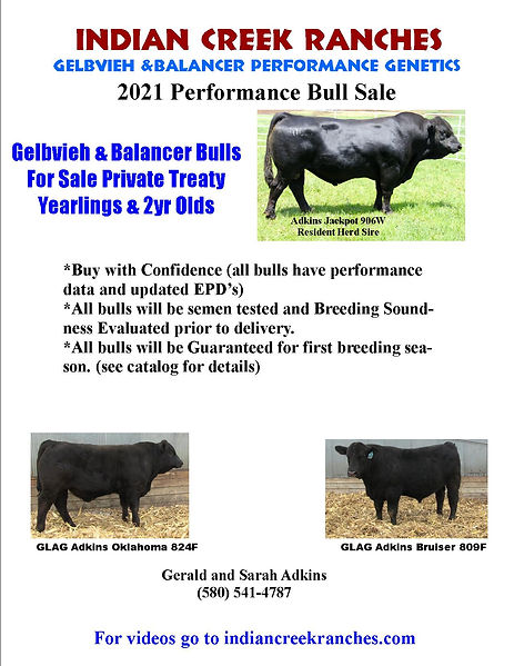 Bull Sale Catalog Cover - Fall 2020.jpg