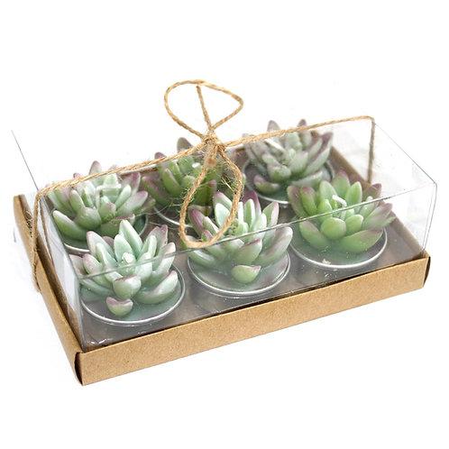 Set of 6 Agave Cactus Tea Light Gift Box