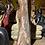Thumbnail: Petrified Wood carved Angel
