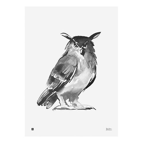 TEEMU JÄRVI - Poster. Eule, 30 x 40 cm
