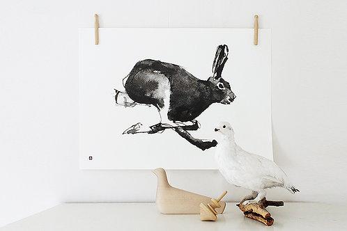 TEEMU JÄRVI - Poster. Hase, 40 x 30 cm