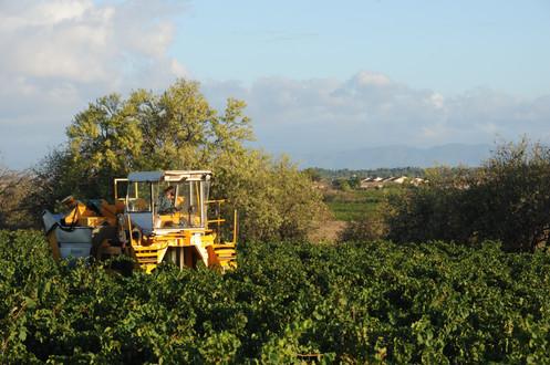 Harvest at Loulou 2012 08 30 (552) .J