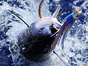 Landing an ahi tuna in Kauai, HI.jpg