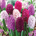 Beautiful Bulbs for Late Season Planting