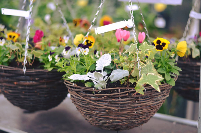 Summer Baskets