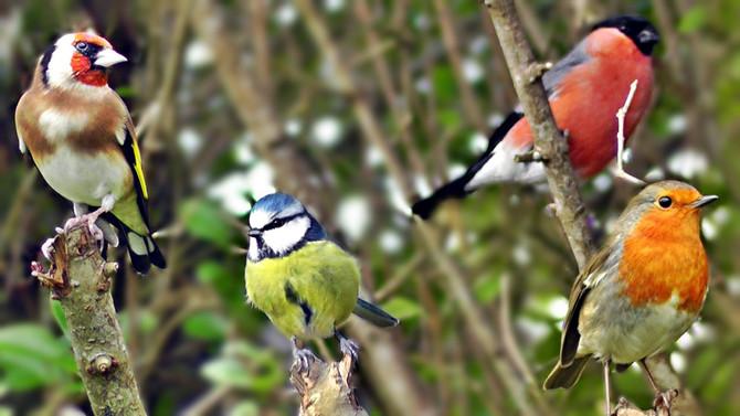 Winter Bird Care