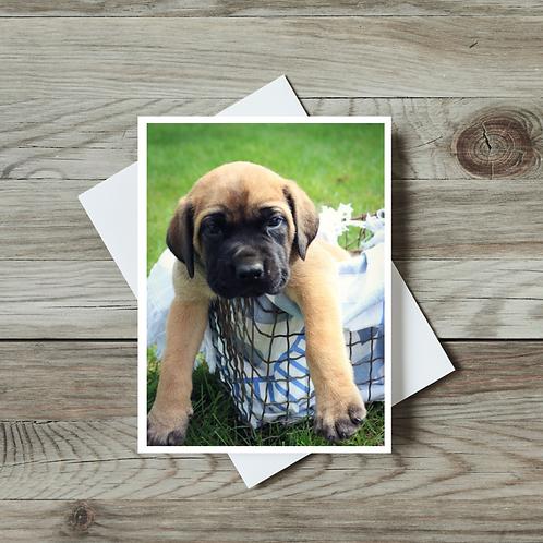English Mastiff Puppy - Paper Birch Art