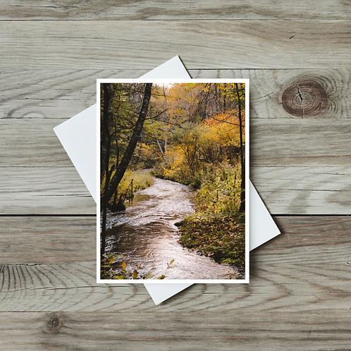 Autumn Creek - Paper Birch Art
