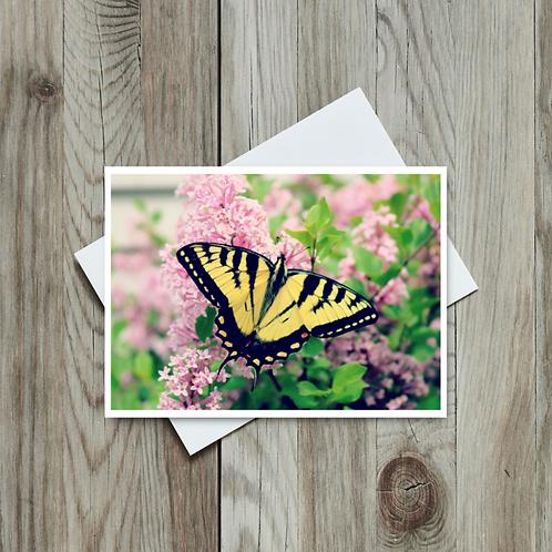 Canadian Tiger Swallowtail - Paper Birch Art