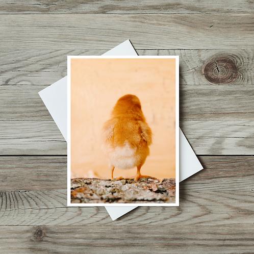 Baby Chick - Paper Birch Art