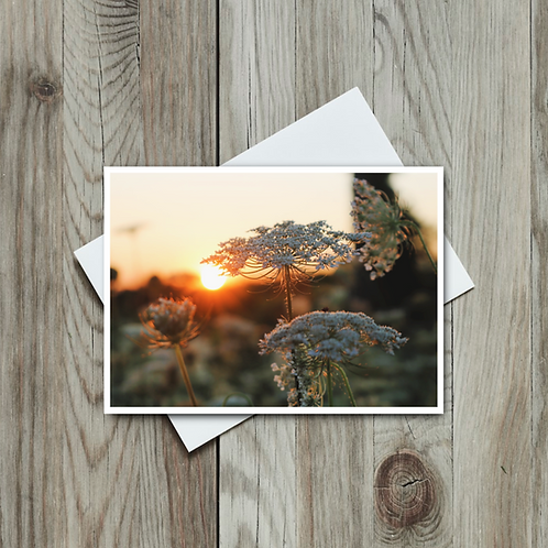 Queen Anne's Lace Blank Greeting Card