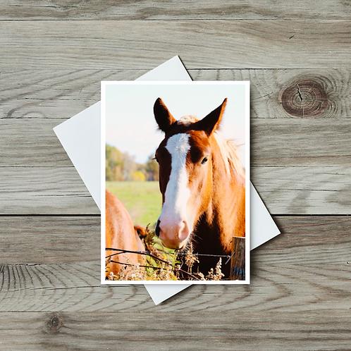 Horse Blank Greeting Card - Paper Birch Art