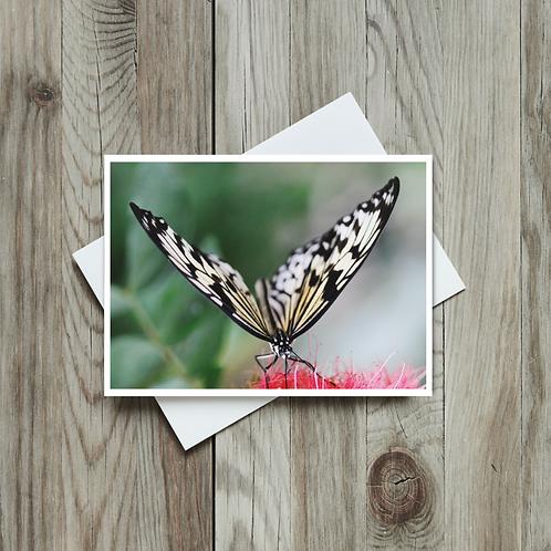 Rice Paper Butterfly - Paper Birch Art