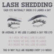 Lash Shedding.jpg