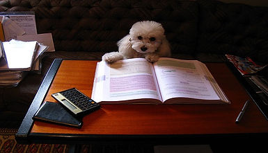 dog studying with book