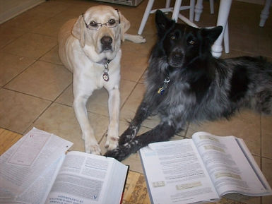 two dogs studying