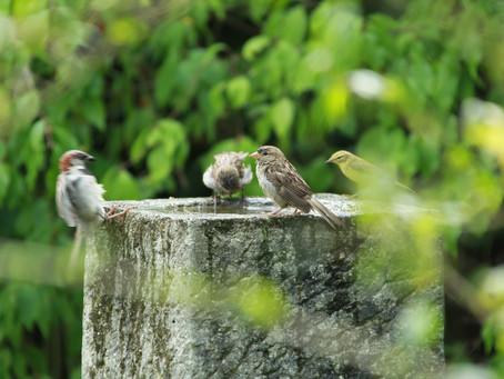 Das Vogeljahr im Naturgarten an der Burgstrasse
