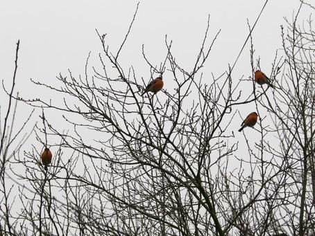 Vogel spüren den Frühling