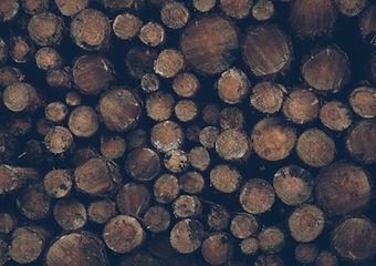 Baum-Abbau