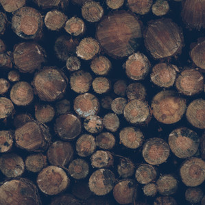Tree Maintenance in South Carolina & Georgia