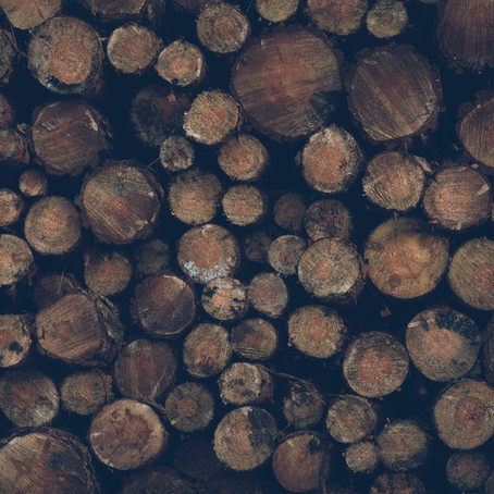 Salvemos nuestros bosques y selvas