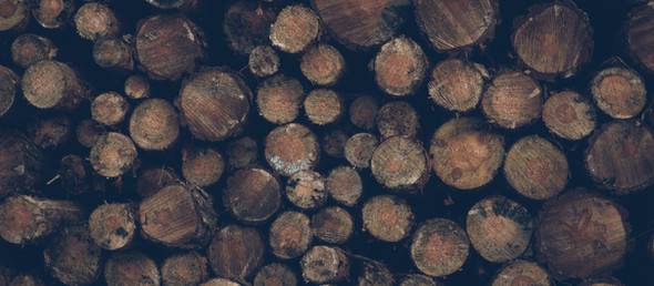 Poem:  My Family is Supported by Timber Dollars