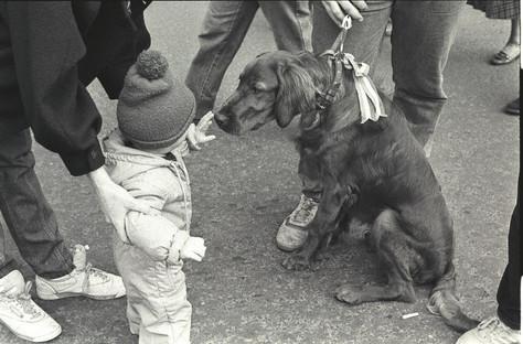 Kutya a Kossuth téren, nyakörvén nemzeti színű szalag.