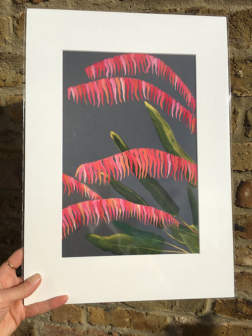 """Tropics in London Pink"" Giclee print A3"