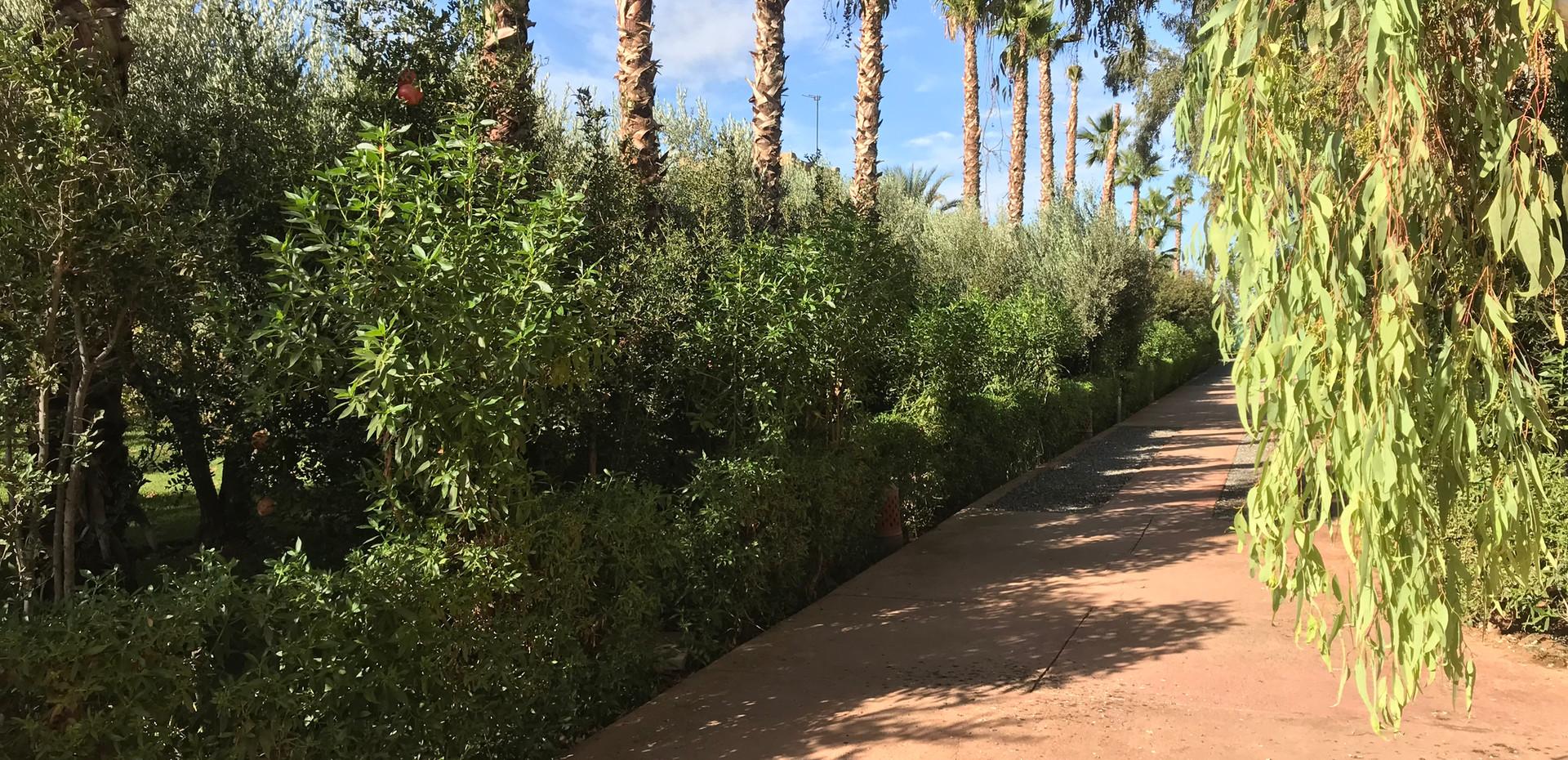 Your Path Dar Gonzo Garden