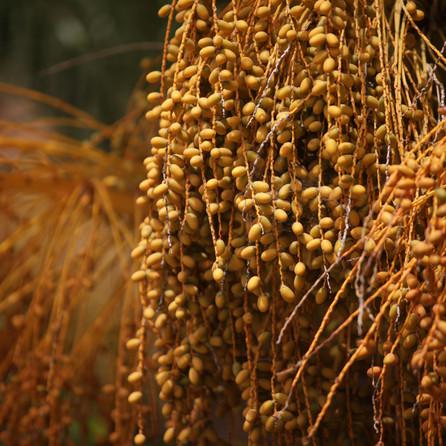Dates Dar Gonzo Garden