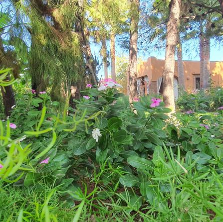 Blloming Dar Gonzo Garden