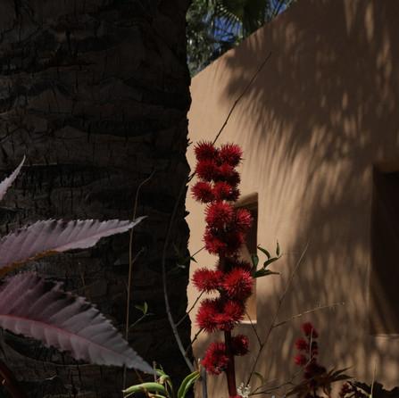 Blooming Dar Gonzo Garden