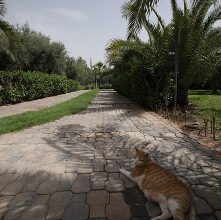 Path and Real Cat Dar Gonzo Garden