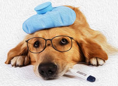 Meu plano de saúde animal não quer liberar um exame/tratamento/internação. O que fazer?