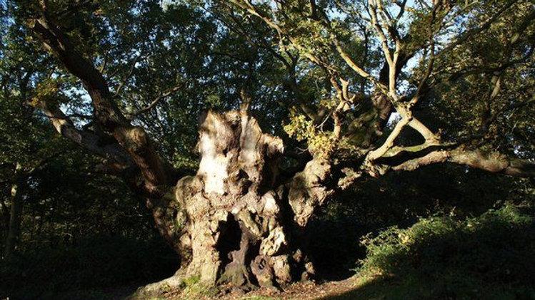 Mistley Woods Ghost Hunt