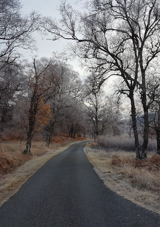frosty birch.jpeg