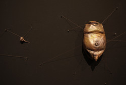 金蝉脱壳(局部)   电镀铜    尺寸因空间而异    Crafty Esca