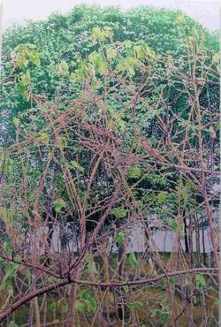 冬去春来 100x150 2011