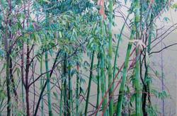 竹   100x150 2011年