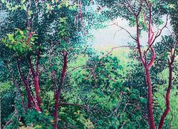 密林 110x150     2011
