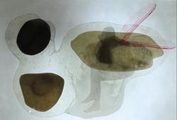 罗苇《透明》系列 综合材料 50x30cm 2012 2