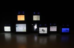 杨光南,2014年6月5日,录像,2014
