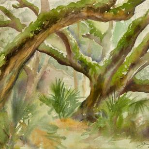 Cumberland oaks.jpg