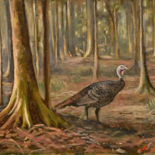 swamp turkey