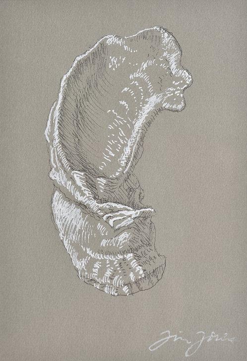 Jim Jones - Oyster Collection - B
