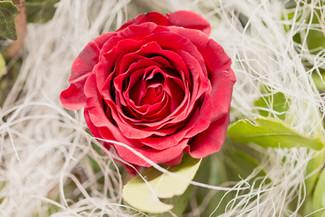 Joyeuse St Valentin à tous les amoureux !