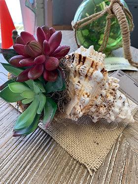 Lg Shell Succulent