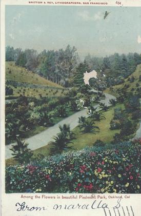 Postcard - Piedmont Park- Palm pathway.j