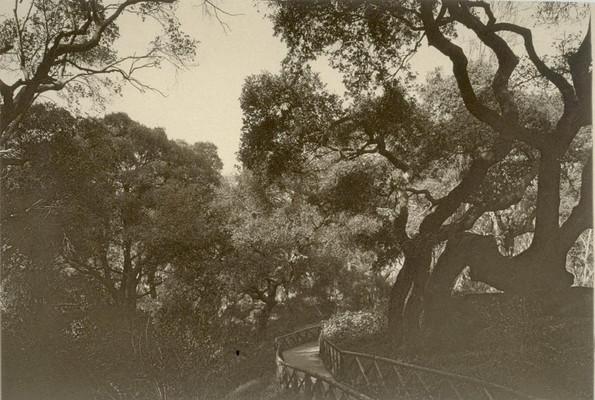 Postcard - Piedmont Park- Narrow Pathway